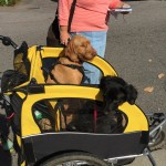 Dogs in a carriage ready for People Chase 5K Fun Run - EDA 2017